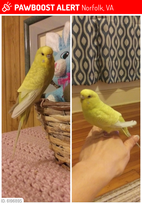 Lost Female Bird last seen Ethel Ave & Lucile Ave, Norfolk, VA 23504