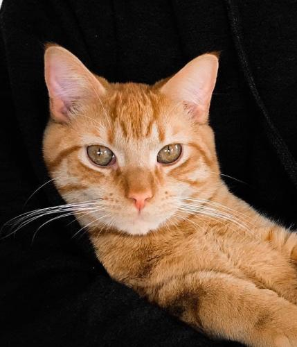 Lost Male Cat last seen Hilton elementary , Newport News, VA 23601