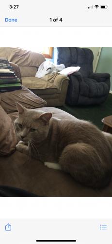 Lost Male Cat last seen Rosemont & Holland , Virginia Beach, VA 23452