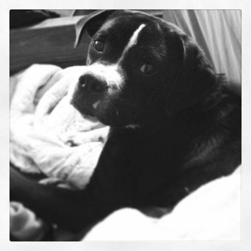 Lost Female Dog last seen Bellwood Rd and Tyler Ave, Newport News, VA 23601