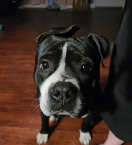 Found/Stray Male Dog last seen Lynnhaven parkway/magic hollow, Virginia Beach, VA 23453