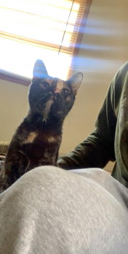 Lost Female Cat last seen Ivy farms and jefferson, Newport News, VA 23601