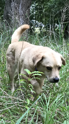 Lost Female Dog last seen Ridge wood beach Blvd Jacksonville , Virginia Beach, VA 23452
