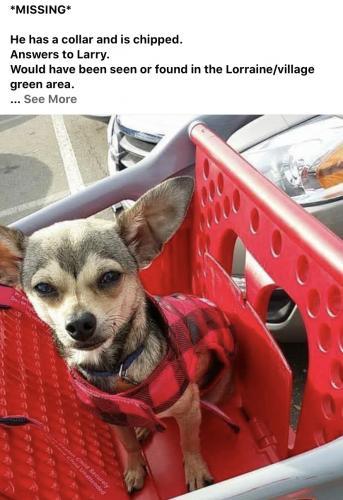 Lost Male Dog last seen Lorraine/village green , Stockton, CA 95210