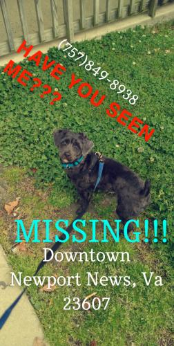 Lost Male Dog last seen 25th Street, Newport News, Va, Newport News, VA 23607