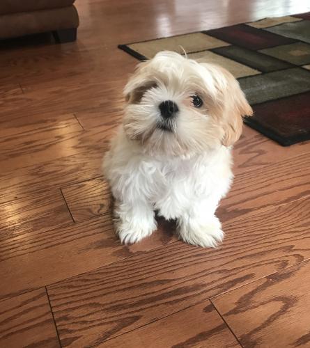 Lost Male Dog last seen Tidewater, Norfolk, VA 23509