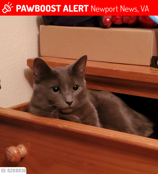 Lost Female Cat last seen Amherst ave across from walmart, Newport News, VA 23605
