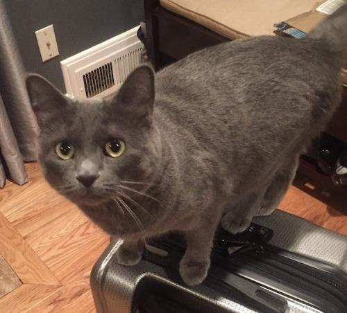 Lost Female Cat last seen Beech Tree Drive and Florence Lane, Rose Hill, VA 22310