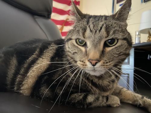 Lost Male Cat last seen Rokeby Oleander, Chesapeake, VA 23325