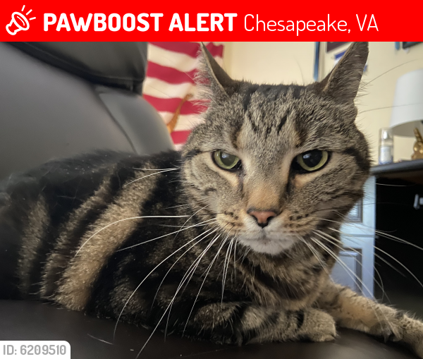 Lost Male Cat last seen Rokeby Oleander, Chesapeake, VA 23325