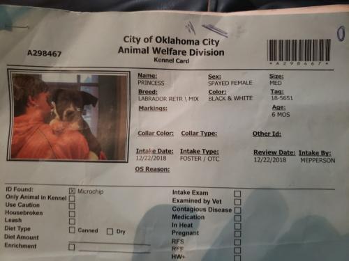 Lost Female Dog last seen Valley Brook S.E. 59TH & EASTERN, Oklahoma City, OK 73149