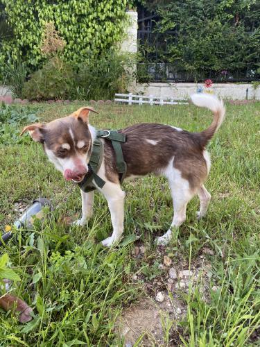 Found/Stray Male Dog last seen 3rd and La Cienega , Los Angeles, CA 90048