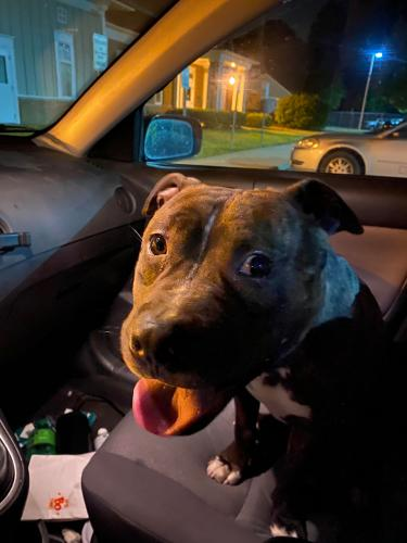 Found/Stray Male Dog last seen Oceana and Virginia Beach Blvd., Virginia Beach, VA 23454