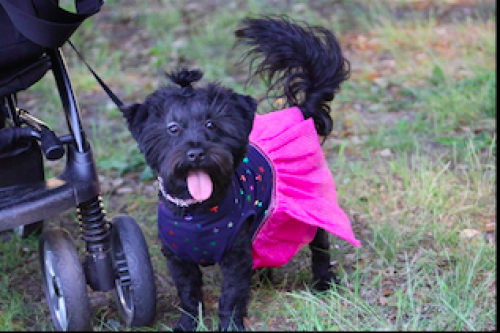 Lost Female Dog last seen Gilpin Avenue, Norfolk, VA 23503