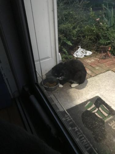 Found/Stray Unknown Cat last seen Kempsville Road & Hunningdon Woods Blvd , Chesapeake, VA 23320
