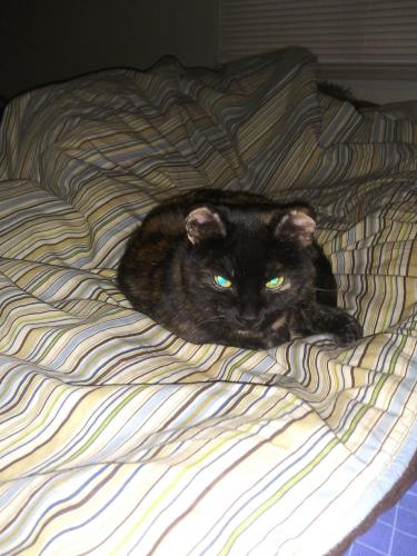 Lost Female Cat last seen Air Force Gymnastic Center, Green Bay, WI 54303