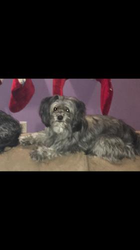 Lost Male Dog last seen Weatherstone & Okeefe, De Pere, WI 54115