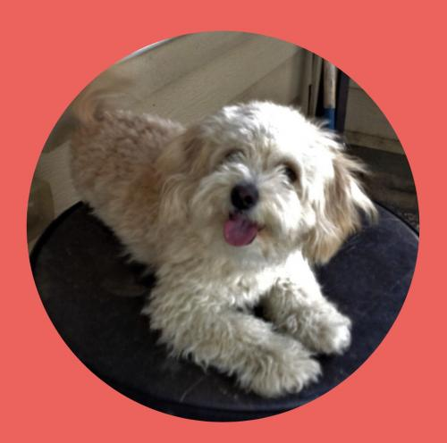 Lost Female Dog last seen Dande St., Bridgeport, CT 06608
