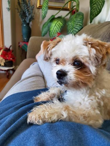 Lost Male Dog last seen Thatcher and Long St, Pueblo, CO 81005