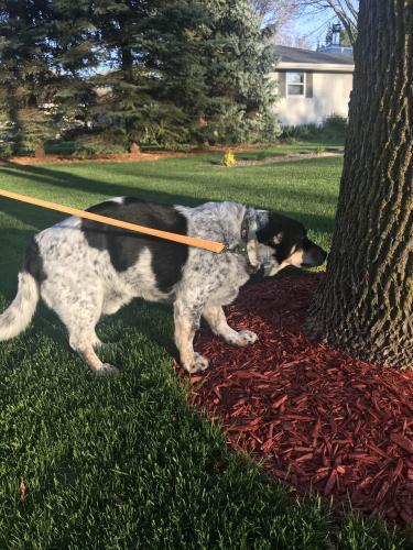 Found/Stray Unknown Dog last seen Off ridge road , Green Bay, WI 54304
