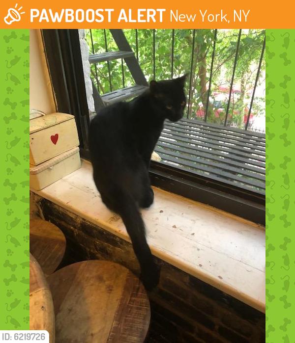 Found/Stray Female Cat last seen 4th street, New York, NY 10009