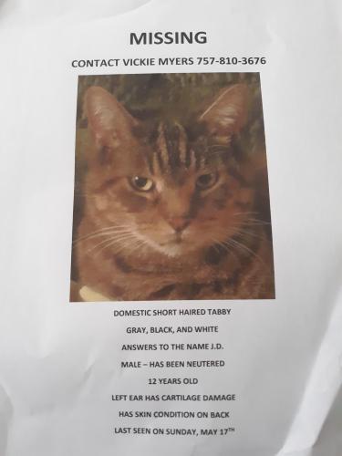 Lost Male Cat last seen Jefferson Ave and Mercury Blvd, Newport News, VA 23605