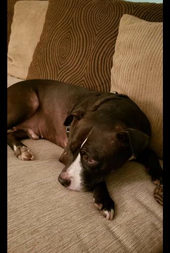 Lost Male Dog last seen Junction Blvd , Queens, NY 11373