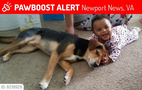 Lost Male Dog last seen Huntington beach, Newport News, VA 23607