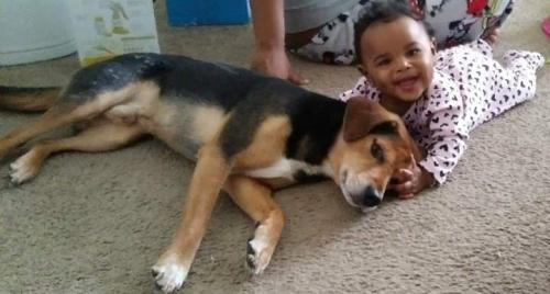 Lost Male Dog last seen Huntington beach, Newport News, VA 23607