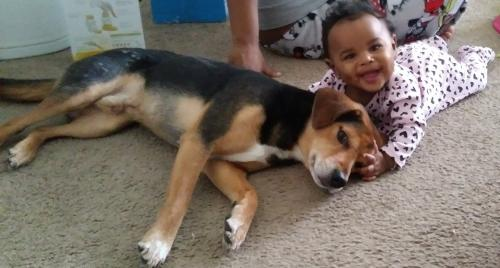 Lost Male Dog last seen 75th st, jefferson, Newport News, VA 23607