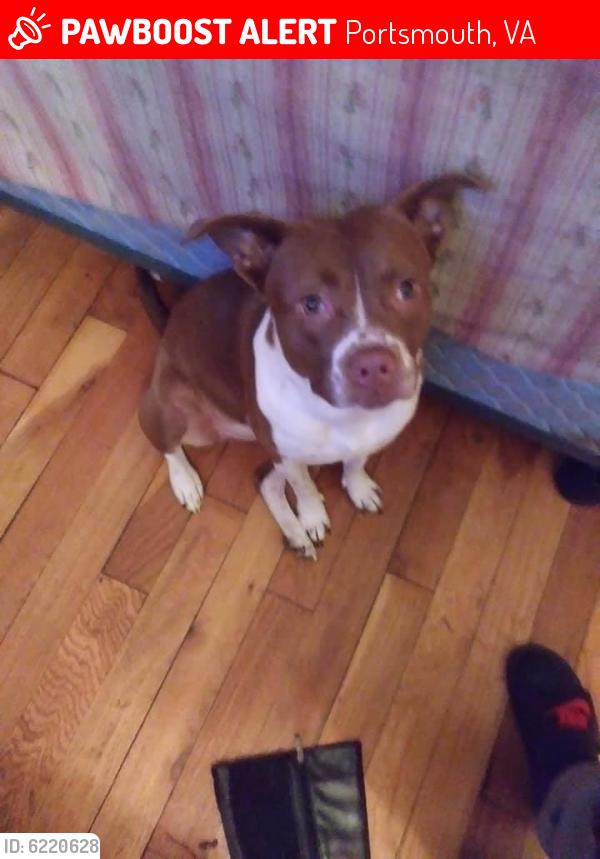 Lost Female Dog last seen Cradock neighborhood , Portsmouth, VA 23523