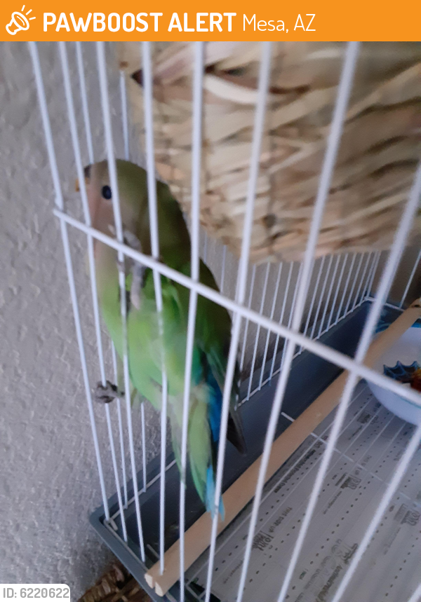 Found/Stray Unknown Bird last seen N. Stapley Dr., Mesa, AZ 85203