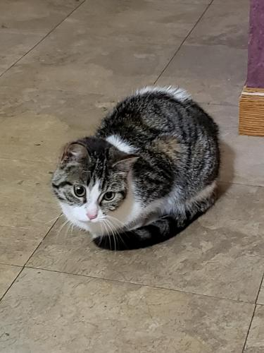 Found/Stray Unknown Cat last seen Ballard rd and equestrian tr, Appleton, WI 54913