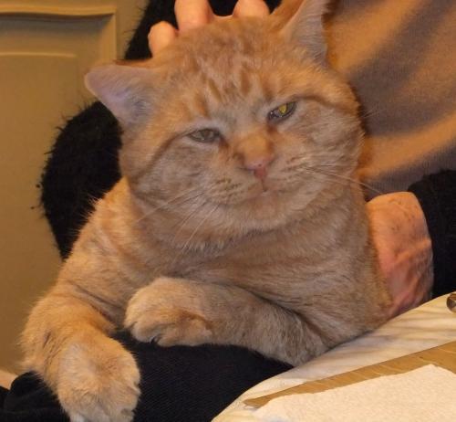 Lost Male Cat last seen Winnebago & Oneida St (Columbus School Area), Appleton, WI 54912