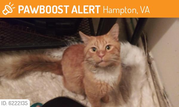Found/Stray Male Cat last seen Near Goldsboro Dr, Hampton, VA 23605