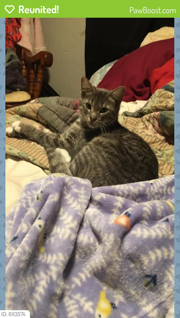 Reunited Female Cat last seen Old Ave & Briarfield Rd., Newport News, VA 23605