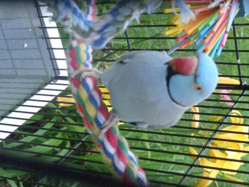 Lost Male Bird last seen Riverside Drive & Sunset Beach Road, Suamico, WI 54313