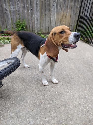 Found/Stray Male Dog last seen Tarrallton park, Norfolk, VA 23518