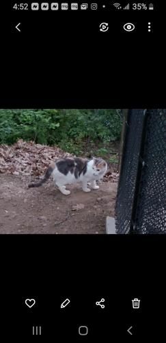 Found/Stray Unknown Cat last seen Near Cadmus Ave & 46, Elmwood Park, NJ 07407