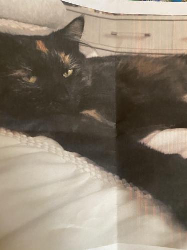 Lost Female Cat last seen Near Argonne ave, Norfolk, VA 23509