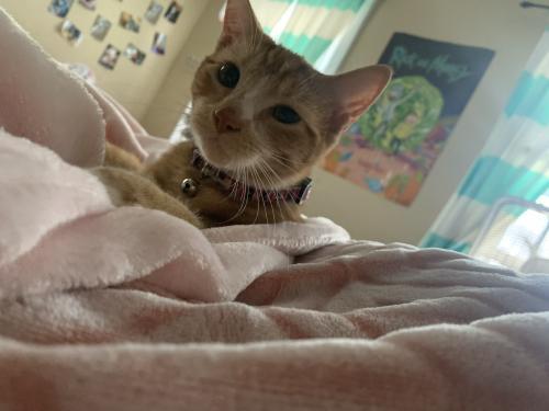 Lost Female Cat last seen Settler Landing & Stewart , Hampton, VA 23669