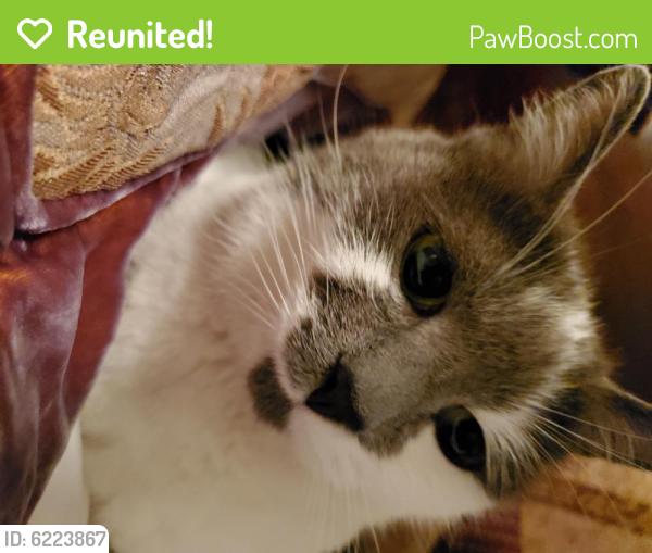 Reunited Female Cat last seen Foley Street & Connecticut Avenue, Silver Spring, MD 20902