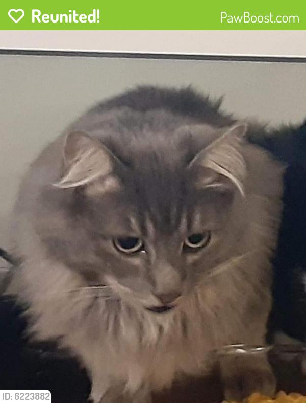 Reunited Male Cat last seen 30th St SE & Shaw Road, Puyallup, WA 98374