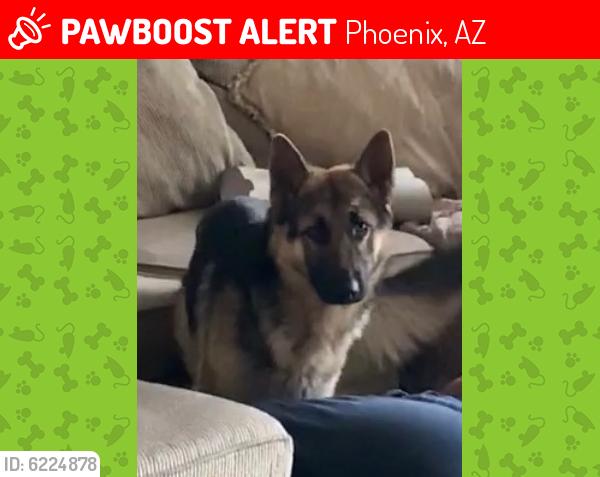 Lost Male Dog last seen Near ave and northern, Phoenix, AZ 85031