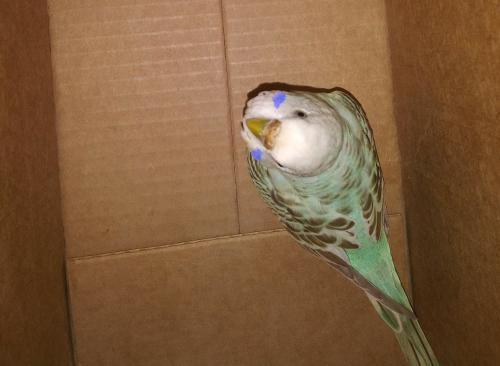 Found/Stray Unknown Bird last seen Near , Pueblo, CO 81003