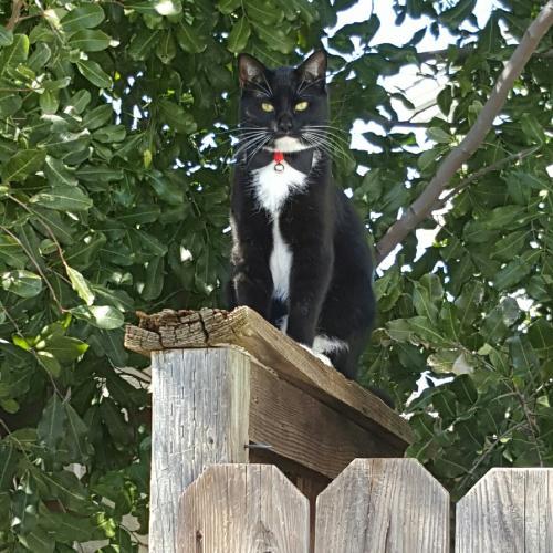 Lost Male Cat last seen Cache peak dr, Antioch, CA 94531
