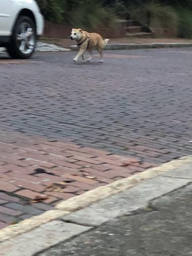 Found/Stray Unknown Dog last seen Orange St and Walnut , Macon, GA 31201