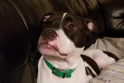Lost Male Dog last seen Near Todd Circle , Warner Robins, GA 31088