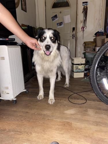 Found/Stray Male Dog last seen Bayview Bvd, Norfolk, VA 23513