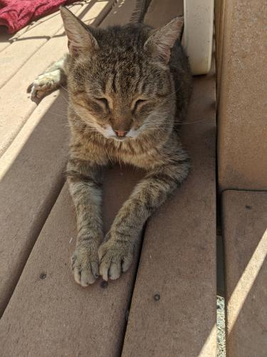 Found/Stray Male Cat last seen St. Peter's cemetery, Poughkeepsie, NY 12601